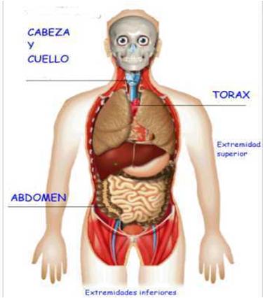 El cuerpo humano | BLOG BIO-QUIM